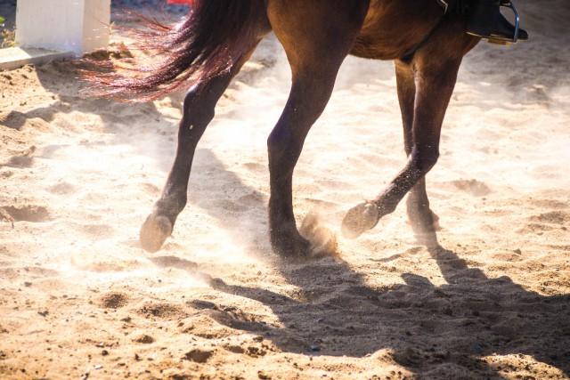 Beim Überspringen eines Hindernisses kam das Pferd mitsamt der Reiterin zu Sturz. © Shutterstock / Usanee