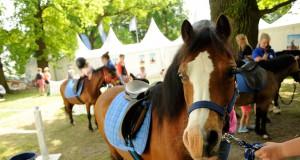 Zu erleben beim Global Jumping Berlin: Der PM-Ponyspaß, präsentiert von Pferde für unsere Kinder e.V. © Isabel Schiffler