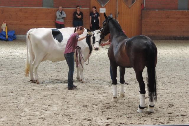 Interessenten können sich und ihr Pferd unter info@minaentertainment.de anmelden. © Mina Entertainment