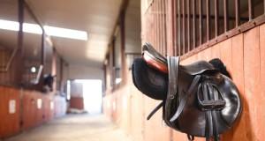 Ein angenehmes Miteinander im Stall sollte allen Pferdebesitzern ein Anliegen sein. © Konstantin Tronin / Shutterstock