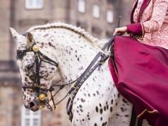 Die klassisch-barocke Reitkunst hat eine lange Tradition. © Shutterstock | Sara Julin Ingelmark