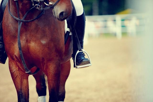 Nimm dir die Zeit, die du und dein Pferd benötigt, um euch auf eure Aufgaben vorzubereiten. © Shutterstock | Elya Vatel