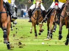 Polo erfordert viel Geschick und eine schnelle Reaktionsfähigkeit. © Shutterstock | Kento35