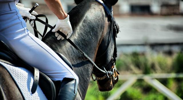 Der OEPS hat als Empfehlung bzw. als Hilfestellung für Veranstalter ein Sicherheitskonzept für Corona-Turnier entworfen. © Shutterstock/ Kiselev AndreyValerevich