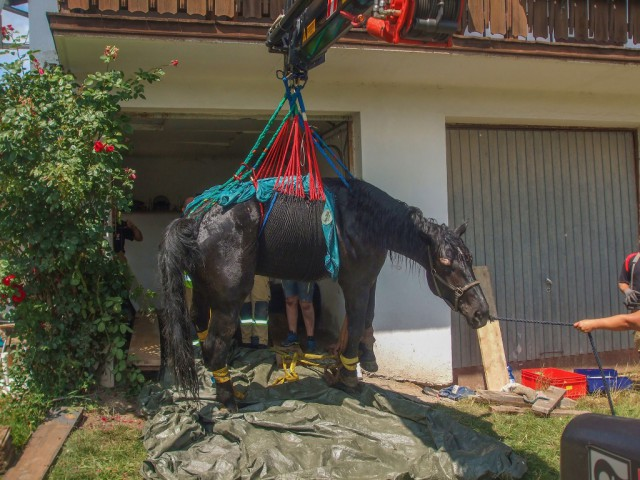 Ein Pferd drang in eine Garage ein und stürzte in die Schmiergrube. Nach dem Ausbau des Tores konnte das Tier geborgen werden. © facebook Feuerwehr St.Johann in Tirol