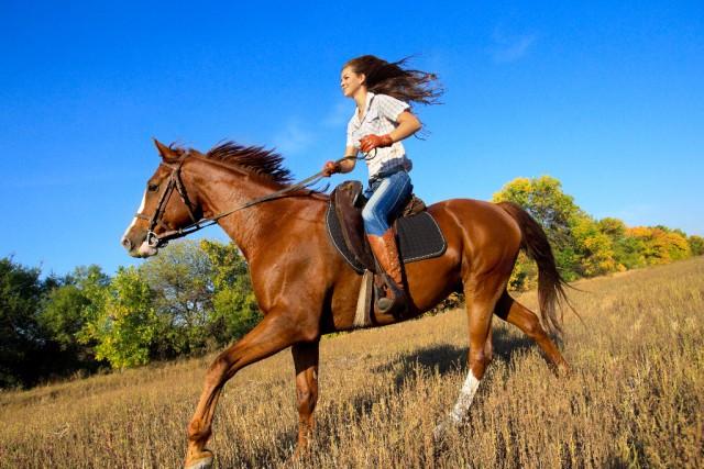 Das Arbeitspensum und die Haltung des Pferdes ist ausschlaggebend für eine individuelle Einschätzung des Futterbedarfs. ©