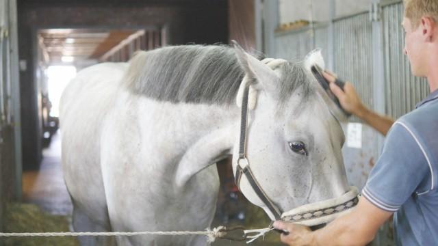 Bevor du dich mit negativen Menschen beschäftigst, widme deine Aufmerksamkeit lieber deinem Pferd. © Shutterstock | Oleh Slepchenko