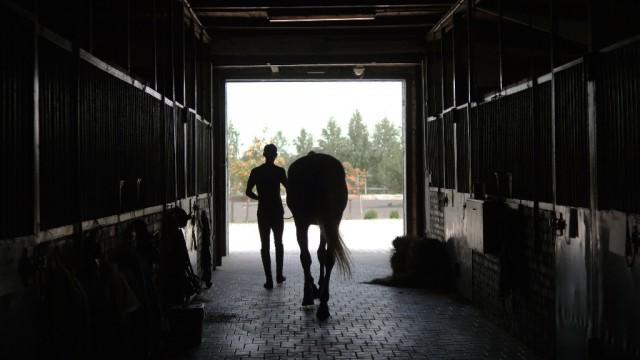 Besser, als mit einem Energie-Räuber zu sprechen ist es, sich in Ruhe mit seinem Pferd zu beschäftigen. © Shutterstock | Oleh Slepchenko