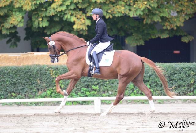Finalist in der Materialprüfung der 4-jährigen Pferd: Quentin RGF unter Julia Hruby. © Matthias Mayer