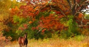 Im Herbst schiebt das Unterfell nach, aber die Energiezufuhr durch den Weidegang läßt nach. Wie kann man das Pferd in dieser Zeit am besten versorgen? © Francey / Shutterstock