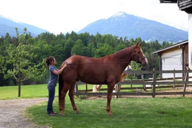 Aktivgymnastik erhöht die Kraft und die Gelenkigkeit eures Pferd. © Adrienne Tomkinson