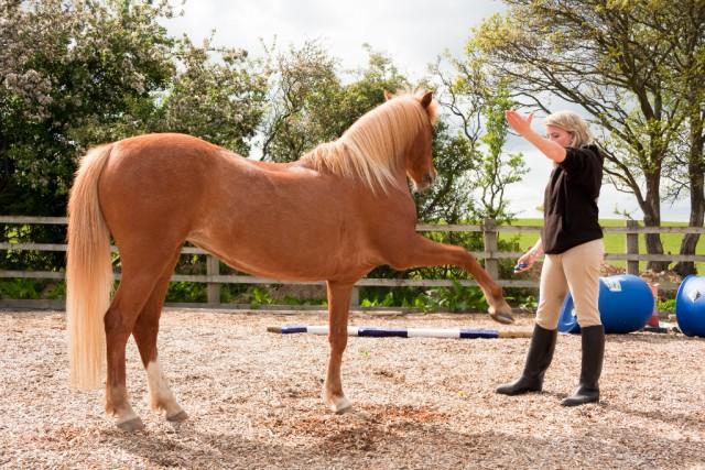 Fitnessaufbau kann am Boden oder zu Pferd stattfinden © groomee