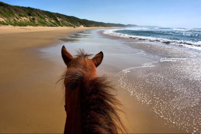 Verändern eure Reiten, um Ihr Pferd glücklich und motiviert zu halten. © Shutterstock | Photosky