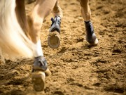 Spend lots of time in trot and canter to improve cardiovascular fitness © Shutterstock | Catwalk Photos