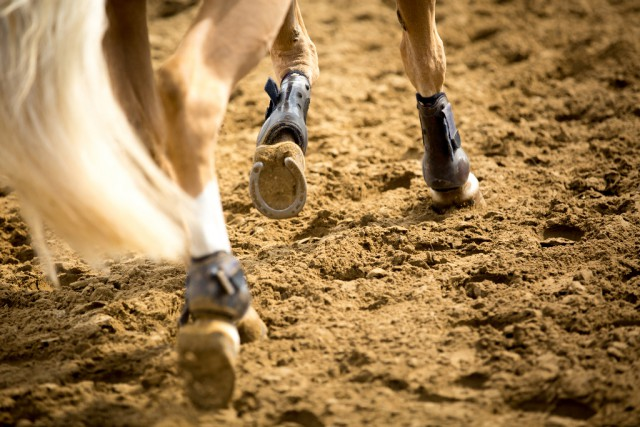 Auch unsere deutschen Nachbarn dürfen nach den Corona-Maßnahmen in einem ersten Lockerungs-Schritt ihre Pferde wieder trainieren und mit ihnen an Unterricht teilnehmen. © Shutterstock | Catwalk Photos