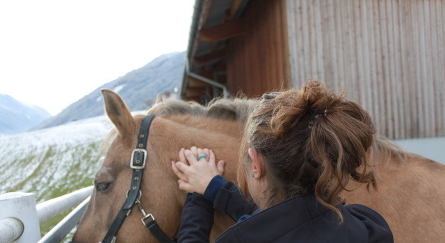 """A Massage at the start of your horses break will only benefit him!"" © Adrienne Tomkinson"
