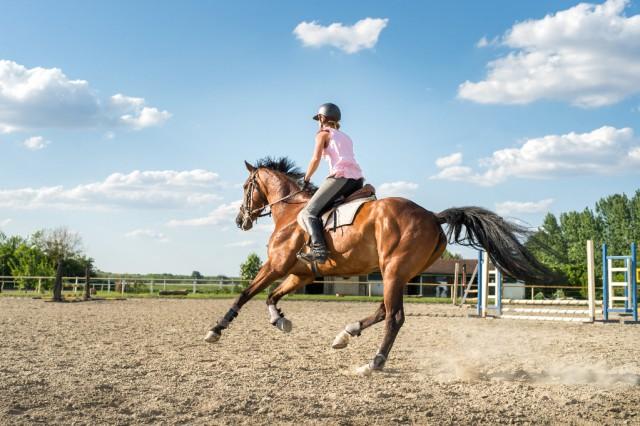 Fitnessaufbau ist wichtig, damit eure Pferd hat die Kraft und Fitness, um die Aktivitäten spezifisch für eure Disziplin durchzuführen © Shutterstock | fotokostic