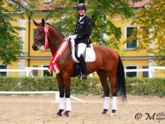 Broadmoars D'Artagnon unter Reiter Heimo Kendlbacher wurde Bundessieger in der Materialprüfung der 3-jährigen Reitpferde. © Matthias Mayer