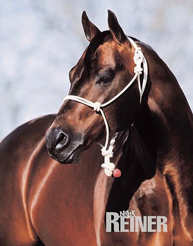 Der neueste 4 Million Dollar Sire: Gallo Del Cielo, besser bekannt als Rooster. © John Brasseaux
