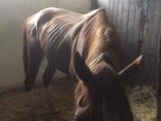 Dieses Foto wurde am 16.9. aufgenommen, nachdem die Pferde mehrere Tage unversorgt geblieben waren. © Privat