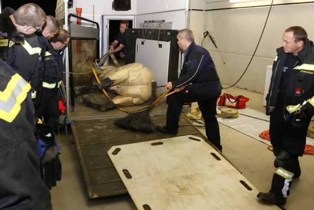 24 Feuerwehrleute der FF Wiener Neudorf übten Techniken zur Pferderettung am 200 kg schweren Dummy. © Freiwillige Feuerwehr Wiener Neudorf