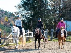 Viel Spaß beim Kurs mit den Pferden Kiss, Sharkan und Fiona. © Emily Puchner