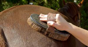 Pferdepflege gehört zur täglichen Arbeit eines Reiters. Aber fühlt sich dein Pferd auch wohl dabei und bist du als Reiter sicher? © Adobe Stock