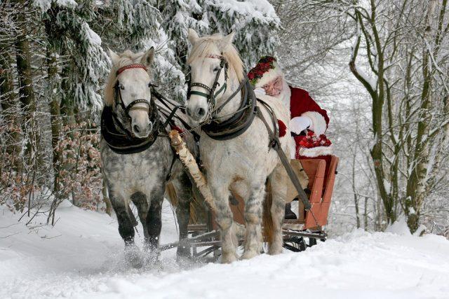 Was bekommt dein Pferd zu Weihnachten?