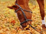 Gönne nicht nur dir, sondern auch deinem Pferd während dem Turnier Auszeiten. © pixabay | alexa
