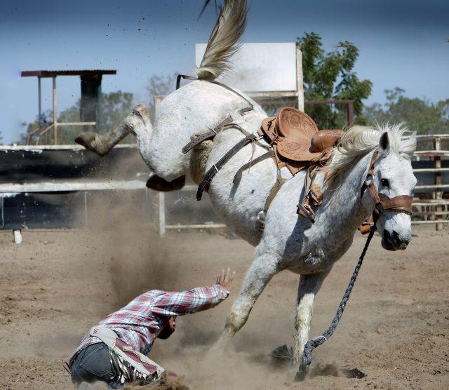 Stresssituationen können schnell zu Missverständnissen zwischen Pferd und Reiter führen. © pixabay | touristbirds