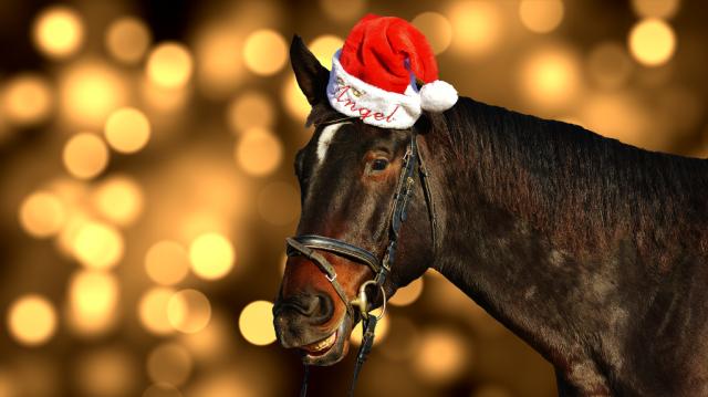 Auch die Pferde brauchen mal eine Pause. © pixabay | alexas_photos