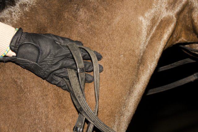 Genieße die Zeit mit deinem Pferd, egal welches Jahr wir schreiben! © Shutterstock / Alexey Wraith