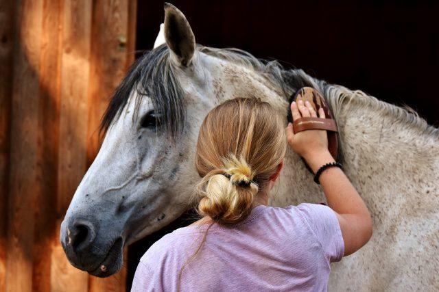 Dein Pferd vor dem Start zu putzen kannst du auch als Ritual nutzen, um dich zu konzentrieren. © pixabay | alexas_photos