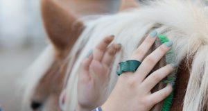 Sieben Neujahrsvorsätze für Reiter und Pferdeliebhaber. © Shutterstock / Budimir Jevtic