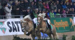 Rasante Springvorführungen werden das Publikum im Pferdezentrum Stadl-Paura begeistern. © abz Lambach