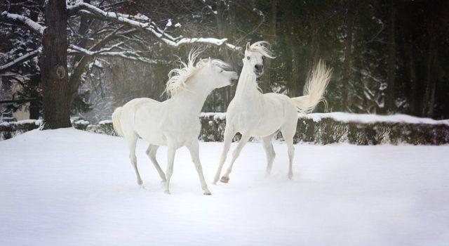 Glückliches Pferd - glücklicher Besitzer! Seien Sie offen für neue Modalitäten, die Ihnen bei der vollständigen Pflege Ihres Pferdes helfen können! © pixabay