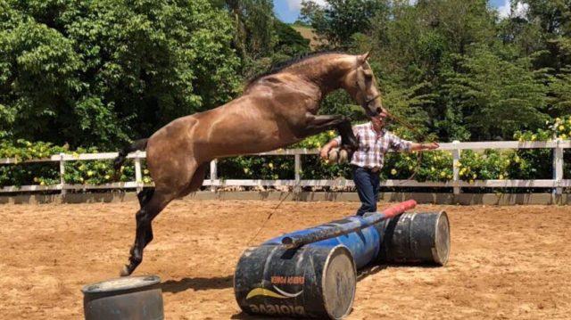 Mit Glenn Stewart werden Übungen vom Boden als auch vom Sattel aus erarbeitet. © hr