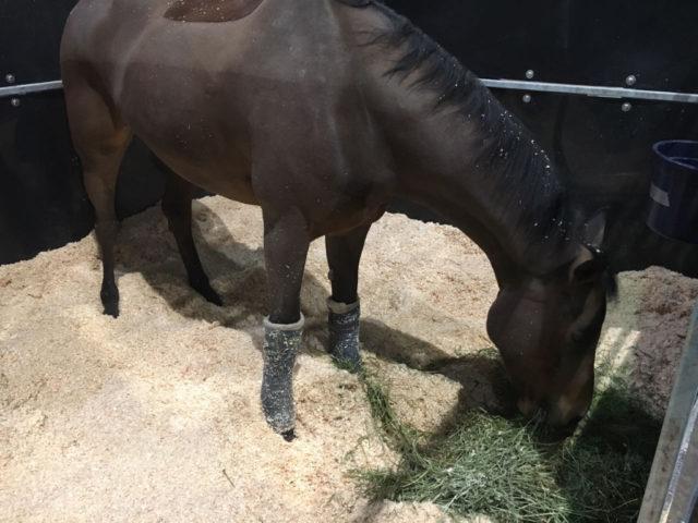 Max Kühners Pferde sind gut in Hong Kong angekommen. © Max Kühner Sporthorses