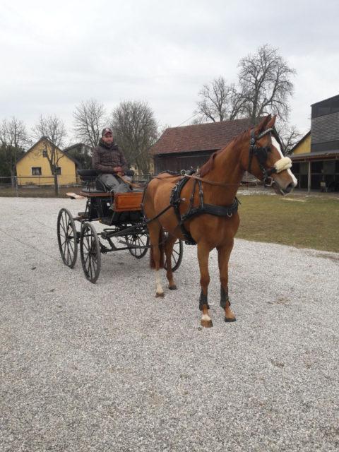 Fixkraft Fahrer Thomas Blumschein und die 5-jährige Hannoveraner Stute Quirina (Quaterhall x Lauries Crusador). © Privat
