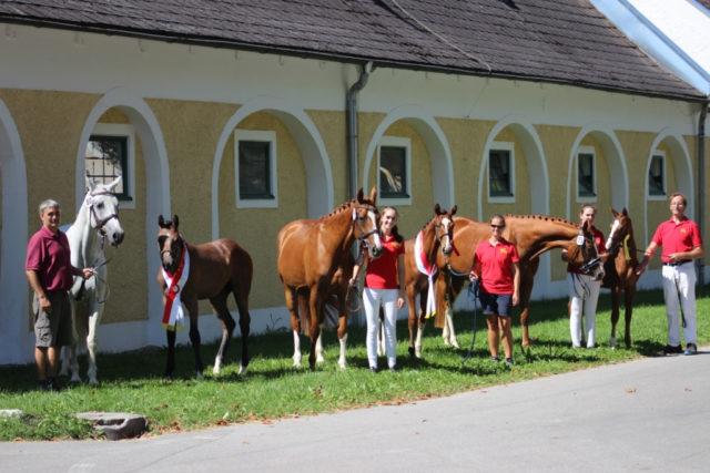 Pferdezucht ist mit unglaublich viel Enthusiasmus, Leidenschaft, Freude, aber auch Leid verbunden. © Großholzner Pferdezucht