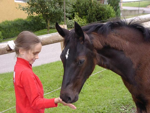 Tochter Katrin und Gute Fee verbindet ein besonderes Band. © Großholzner Pferdezucht