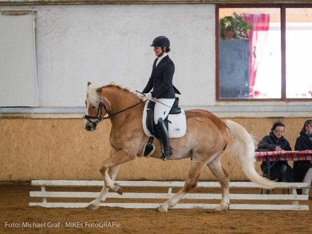 Ambrosio unter der Reiterin Stefanie Hillebrand-Windhager wurde in der Dressurpferdeprüfung mit 7,22 Punkten bewertet. © Michael Graf
