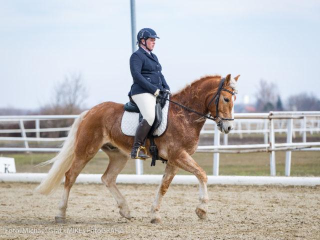 Haflinger Wallach Nice Guy Nico und Sylvia Pribil-Sumetsberger vom PS Equestrain Team (NÖ) wurden Dritte. © Michael Graf