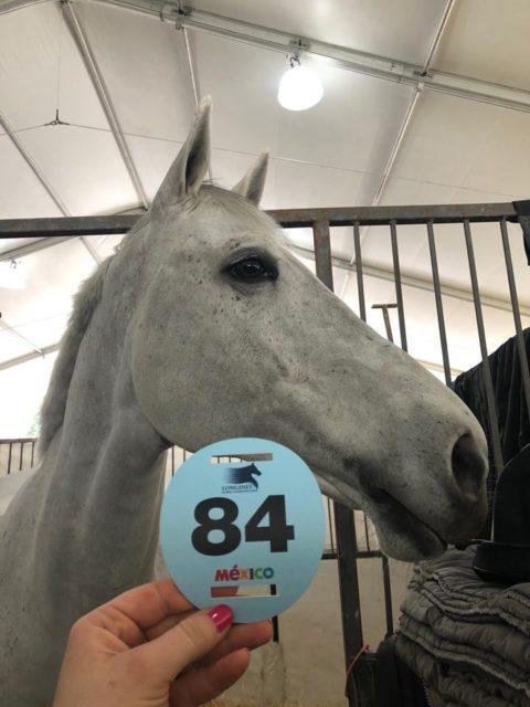 """""""Beide Pferde sind total frisch und fit und haben den Flug spitze überstanden."""", erzählt Resi Rochelt. © Resi Rochelt"""