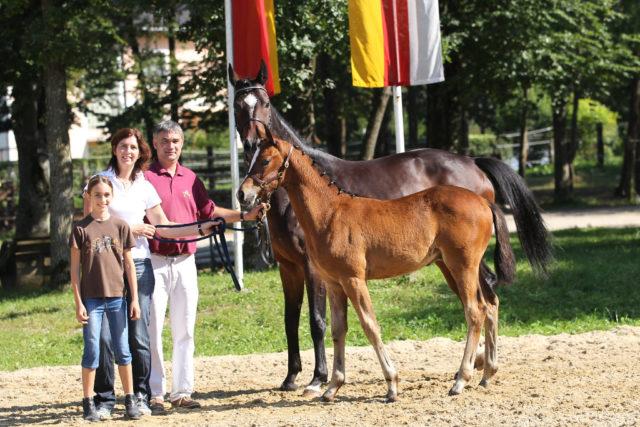Mit Santa Elektia hatte die Familie Großholzer die bisher größten Erfolge auf Fohlenchampionaten, Materialprüfungen und Bundeschampionaten. © Großholzner Pferdezucht