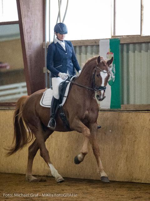 Sandra Ungersbäck (NÖ) und Skydancer 4 siegten in der Kl. A der 5- und 6-jährigen Dressurpferde. © Michael Graf