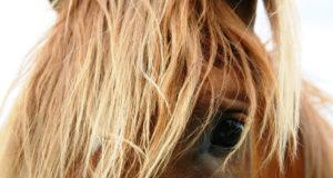 Bei Pferden ist das Bornavirus seit über 100 Jahren bekannt. © pexels