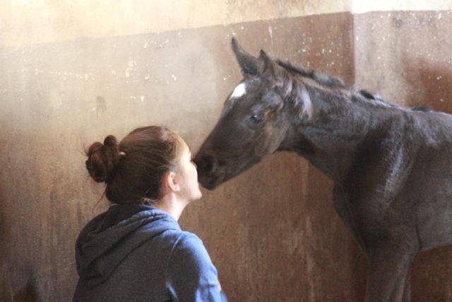 Große Freude bei Tochter Katrin: sie hatte sich einen kleinen schwarzen Hengst aus ihrer Lieblingsstute gewünscht. © Großholzner Pferdezucht