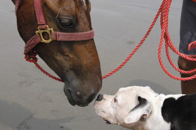Ein Ausritt in Tirol endete mit einem verletzten Pferd weil ein frei laufender Hund dieses gebissen hatte. Symbolbild © pixabay.com