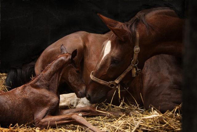 Nur ein Gentest kann Gewissheit bringen, ob ein Pferd Träger des WFFS-Syndroms ist. © Adobe Stock